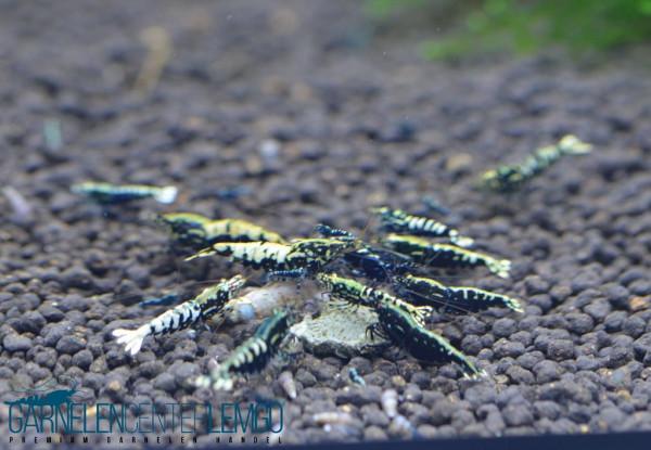 Skyfish Galaxy Fishbone Black - High Grade - DNZ