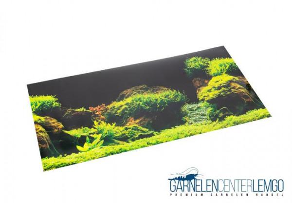 Aqua Nova Aquarien Hintergrund Rock/Plants 60x30cm