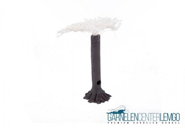 Garnelenbaum mit Fächer - M