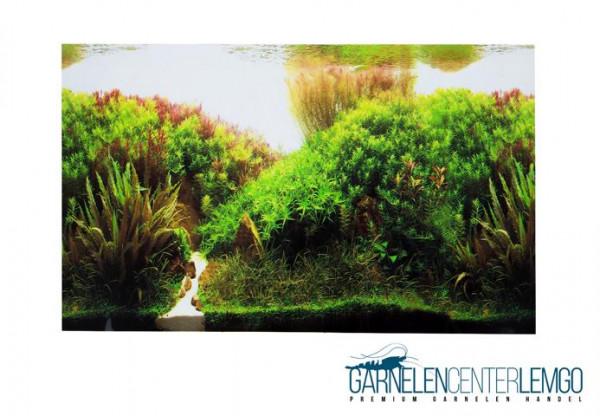 Aquarium Rückwand Folie zweiseitig - Mooslandschaft/Unterwasser-Wald 40cm