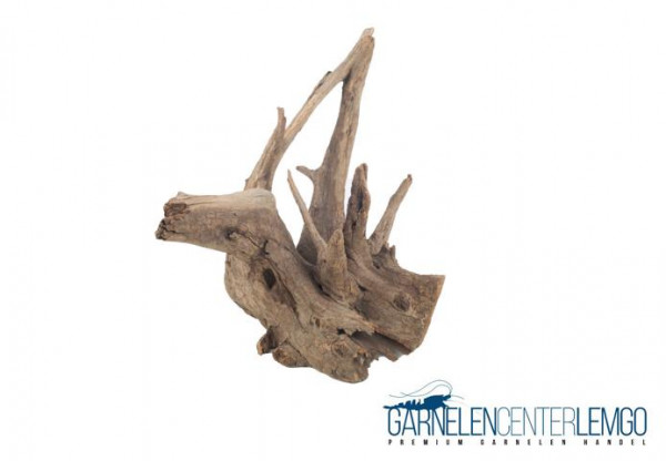 """Pinwood Wurzeln / Corbo Root """"PW1"""""""
