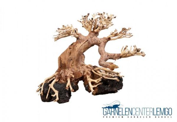 Aqua Bonsai Driftwood auf Lava - Größe L